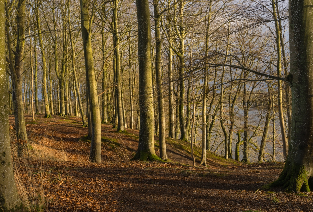 trees_along_the_hald_so_viborg_commune_danemark